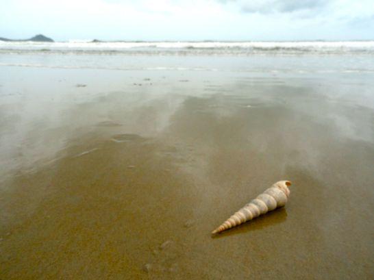 pakmeng shell