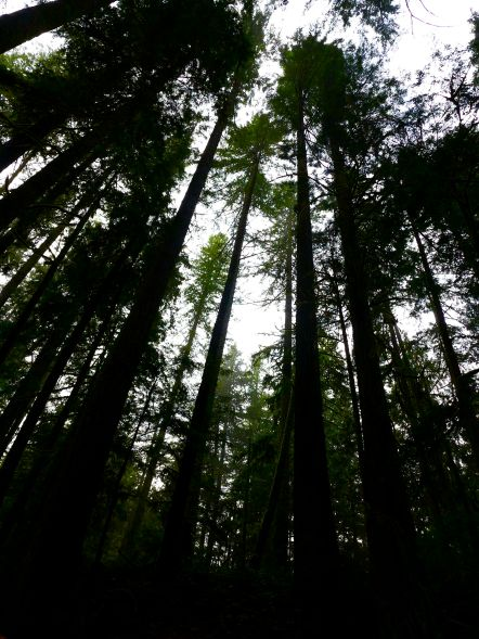 van trees