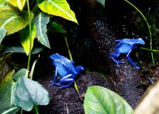39 baltimore aquarium poison dart frogs