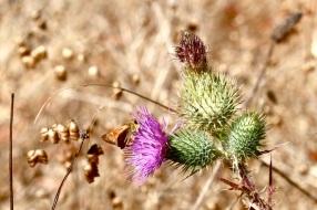 10-muir-woods-butterfly