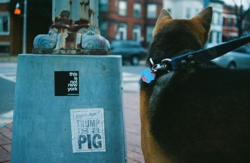 07 trump is a pig ollie washington dc pentax k1000
