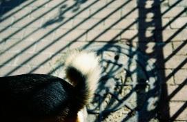 18 ollie tail shadow pentax k1000