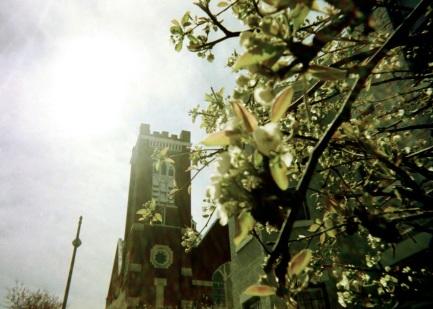 03 washington dc church + magnolia