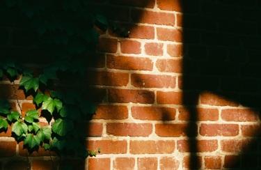 04 washington dc pentax k1000 ivy brick shadow