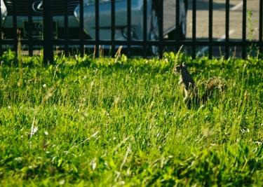 05 washington dc pentax k1000 squirrel