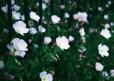 08 washington dc pentax k1000 rhode island ave flowers