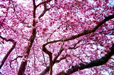 11 washington dc magnolia