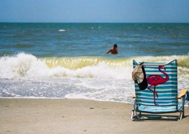 25 myrtle beach flamingo chair south carolina pentax k1000